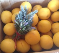 Caja de pomelos blancos o amarillos