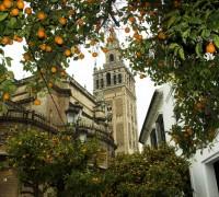 La Giralda de Sevilla entre naranjas amargas