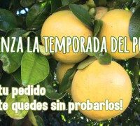 temporada pomelos