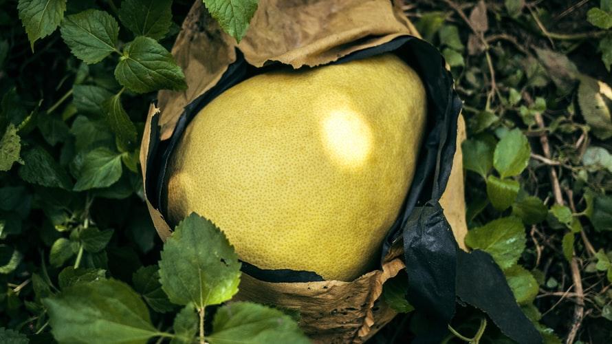 Beneficios de la mascarilla hidratante con pomelo.